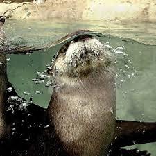 kansas city zoo halloween events lee richardson zoo finney county kansas garden city