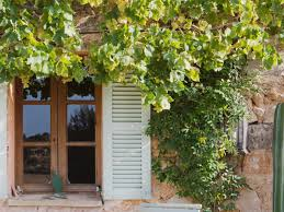 enhance your landscape by growing vines hgtv