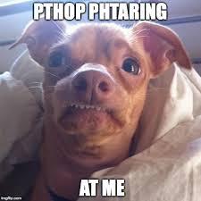 Tuna The Dog Meme - tuna dog viral memes imgflip
