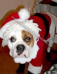 English Bulldog Halloween Costumes Coolest Homemade Santa Clause Dog Costume Santa Clause Costumes