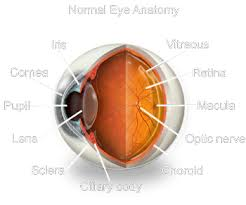 Picture Of Eye Anatomy Davis Optical U0026 Family Eye Health Center Anatomy Of The Eye