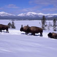 Bison Connect Department Of Interior Science Explorer