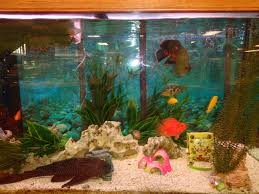 beautiful day in the fish tank musser public library