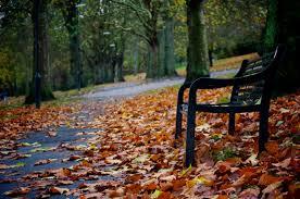 forests autumn enchanted slanted park bench dark forest desktop