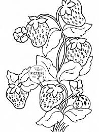 ladybug and strawberries coloring page for kids fruits coloring