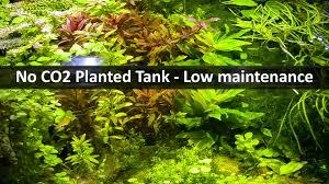 no co2 planted tank low maintenance aquarium youtube