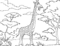 the awesome giraffe coloring pages with regard to encourage to