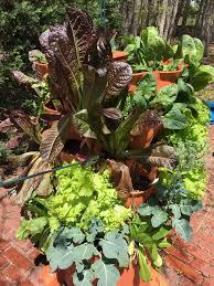 garden tower vertical composting garden garden tower united kingdom