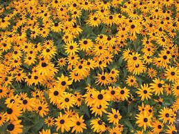 mid summer blooms hgtv