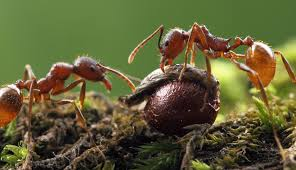 how to fall in love with ants u2013 phenomena