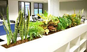 indoor plants singapore indoor desk plants plant hire indoor office plants singapore