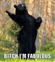 Im Fab Meme - the tales of keogibear a cliché guide to life