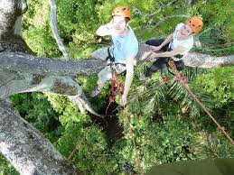 view from the canopy picture of tree climbing manaus