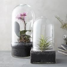 glass cloche terrariums so that u0027s cool