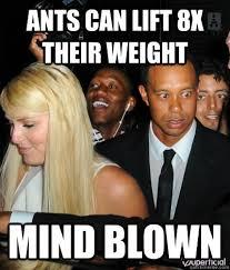 Tiger Woods Meme - tiger woods mind blown memes quickmeme