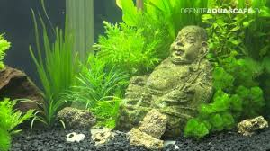 japanese aquascape aquarium decoration zen my buddha zen aquarium fish aquariums