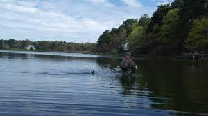 bass river striper will stone on kelleys bay youtube