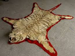 tiger skin rug by van ingen of mysore pre cite u0027s 1947 taxidermy