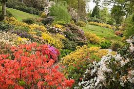 the best spring gardening flowers daniel u0027s lawn u0026 garden center