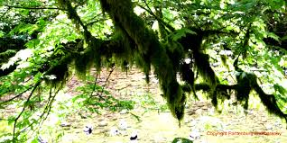 survival myth busted finding directions by tree moss