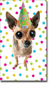 8 best a chihuahuas birthday images on chihuahuas