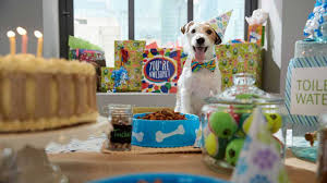 dog birthday party how to throw a worry free dog birthday party