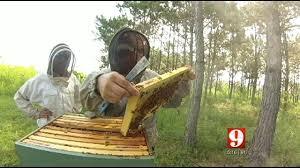 Backyard Beehive Backyard Beekeeping Is Legal Booming In Florida Wftv