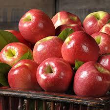 organic fruit of the month club harvestclub organic monthly fruit club the fruit company