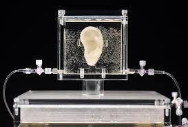live replica of van gogh u0027s ear on display sbs news