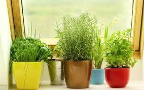 35 creative diy indoor herbs garden ideas ultimate windowsill herb garden ideas