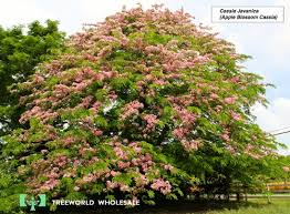 flowering tree for central florida