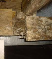 How To Stop Mold In Basement by Mold Prevention In Greensboro Winston Salem High Point
