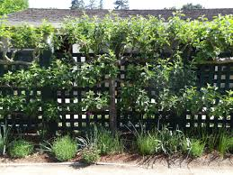 Edible Garden Ideas Edible Garden Ideas Espaliered Fruit Trees Tended