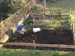 starting a vegetable garden from scratch uk garden post a veggie