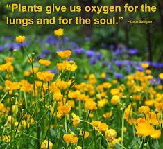 garden inspiration ii american meadows blog