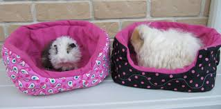 Cuddle Cup Dog Bed All Things Guinea Pig Cuddle Sacks