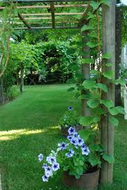 twigs poles and lines women who run with delphiniums