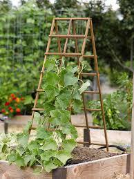 a frame structures in the vegetable garden vegetable garden
