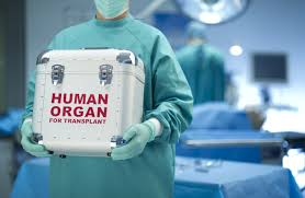 people who write papers for money cash for kidneys the case for a market for organs wsj