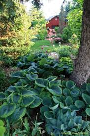 Shady Backyard Ideas by 148 Best Garden Hostas For Part Shade Shade Images On Pinterest
