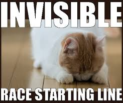Invisible Cat Meme - have a good maze no deposit casino coloring n cats online casino