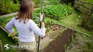 homemade pesticides for home gardens