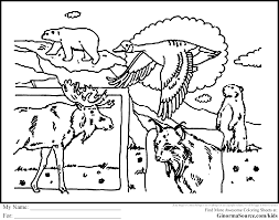canada coloring pages wildlife coloring pages pinterest
