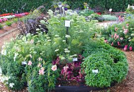 Flower Garden Ideas Small Space Cut Flower Garden Ideas Costa Farms