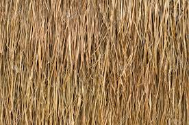 Mexican Thatch Roofing by Straw Roof Material U0026 Mexican Thatch Runner Roll Sc 1 St The Home