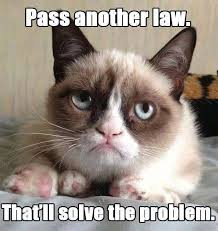 Grumpy Cat Coma Meme - 90 best grumpy cat images on pinterest grumpy cat cats and chistes