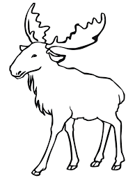 coloring animaltlines printable to color rainforest coloring