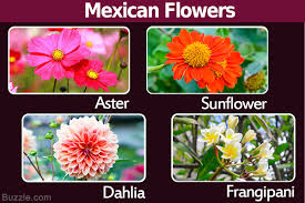Native Plants In The Tropical Rainforest 23 Tempting Pictures Of Glorious Flowers That Are Native To Mexico