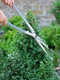 Topiarys Create A Simple Topiary Hgtv