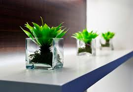 Office Desk Flowers by 8 Benefits Of Plants In The Office